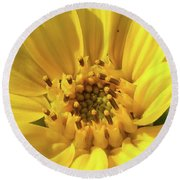 Chipmunk Planting - Sunflower Round Beach Towel