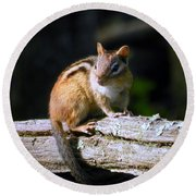 Chipmunk Portrait Round Beach Towel