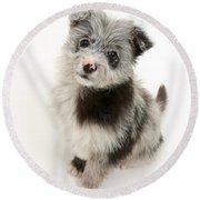 Chipoo Puppy Round Beach Towel