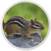 Chippy On The Move Round Beach Towel