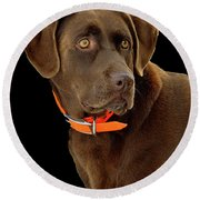 Chocolate Lab Round Beach Towel by William Jobes