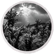 Cholla Cactus Garden Bathed In Sunlight In Black And White Round Beach Towel