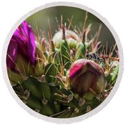 Cholla With Wasp Round Beach Towel