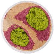 Chondrocytes, Tem Round Beach Towel