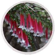Christmas Bells 1 - Australian Native Fuchsia Round Beach Towel