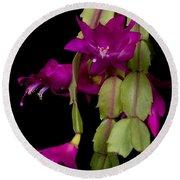 Christmas Cactus Purple Flower Blooms Round Beach Towel