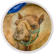 Christmas Camel On Call Round Beach Towel