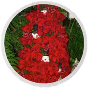 Christmas Poinsettia Display 002 Round Beach Towel