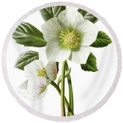 Christmas Rose Floral Illustration Round Beach Towel