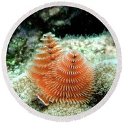 Christmas Tree Worm Round Beach Towel