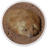 Chubby Prairie Dog Resting In A Shallow Hole Round Beach Towel