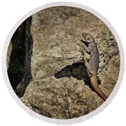 Chuckwalla - Crevice Round Beach Towel