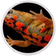 Chuxiong Fire Belly Newt Round Beach Towel