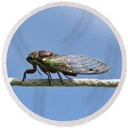 Cicada On The Line Round Beach Towel