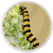 Cinnabar Moth Caterpillar Round Beach Towel