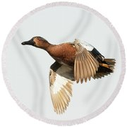 Cinnamon Teal On The Wing Round Beach Towel