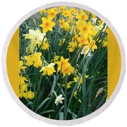 Circle Of Daffodils Round Beach Towel