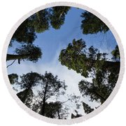 Circle Of Trees Round Beach Towel