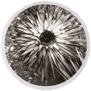 Circle Top Of Joshua Tree Round Beach Towel