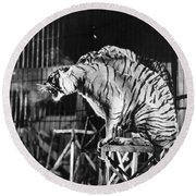 Circus: Tigers Round Beach Towel