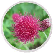 Cirsium Burgandy Thistle Round Beach Towel