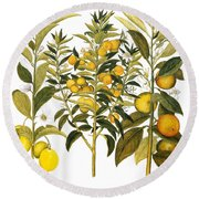 Citron And Orange, 1613 Round Beach Towel