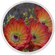 Claret Cup Cactus - Three Of A Kind  Round Beach Towel
