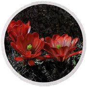 Claret Cups Round Beach Towel
