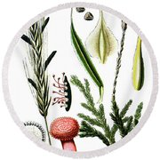 Claviceps Purpures. Recht Wolf's-foot Clubmoss, Stag's- Round Beach Towel