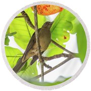 Clay-colored Robin Round Beach Towel