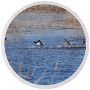 Cleared For Takeoff-ring-necked Ducks  Round Beach Towel