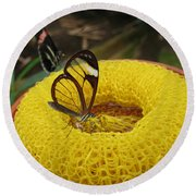 Clearwing Butterfly Round Beach Towel