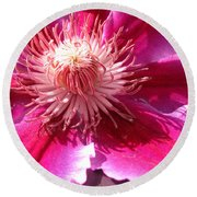 Clematis Bloom.. Round Beach Towel