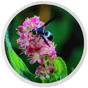Clethra And Wasp Round Beach Towel