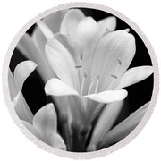Clivia Flowers Black And White Round Beach Towel