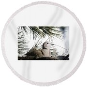 Close Up African Collared Dove Round Beach Towel