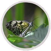 Close Up Look At A Paper Kite Butterfly On Foliage Round Beach Towel