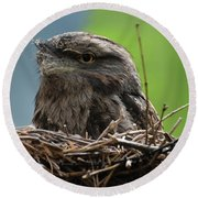 Close Up Look At A Tawny Frogmouth Sitting In A Nest Round Beach Towel