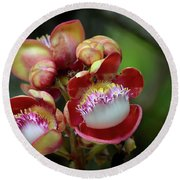 Close-up Macro Of Flower And Fruit Of Cannonball Tree Round Beach Towel