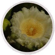 Close Up Of A Cactus Bloom. Round Beach Towel