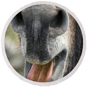 Close-up Of A Donkey's Mouth Round Beach Towel