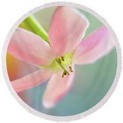 Close Up Of A Pink Flower Round Beach Towel