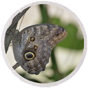 Close Up Of A Pretty Brown Morpho Butterfly  Round Beach Towel