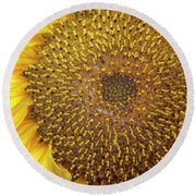 Close Up Of A Sunflower Head Round Beach Towel