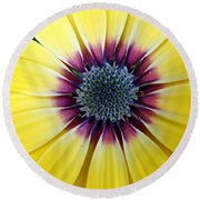 Close-up Of A Yellow African Daisy Round Beach Towel