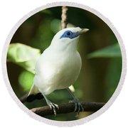 Close-up Of Bali Myna Bird In Trees Round Beach Towel