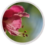 Red Horsechestnut Flower Round Beach Towel