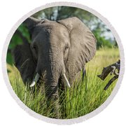 Close-up Of Elephant Behind Bush Facing Camera Round Beach Towel