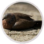 Close-up Of Mottled Pigeon On Sandy Ground Round Beach Towel