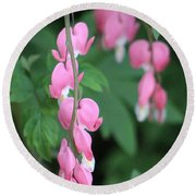 Close Up Of Peacock Pink Bleeding Hearts On Hunter Green Foliage 2 Round Beach Towel